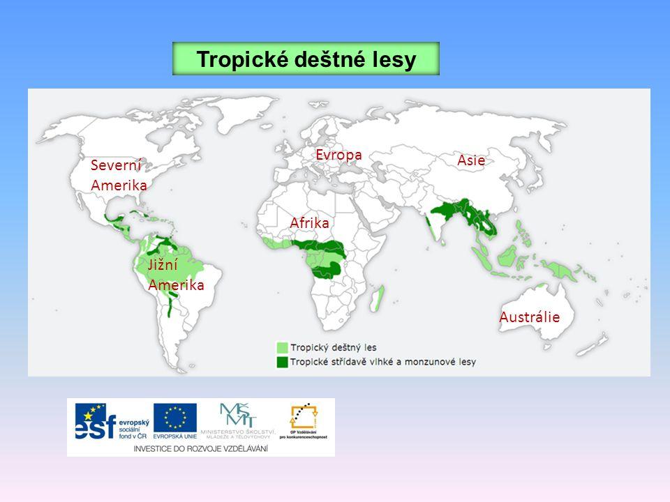 Tropické deštné lesy Evropa Asie Severní Amerika Afrika Jižní Amerika