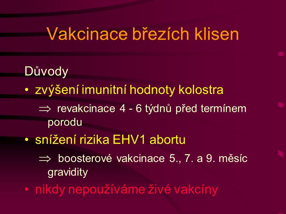 Vakcinace březích klisen