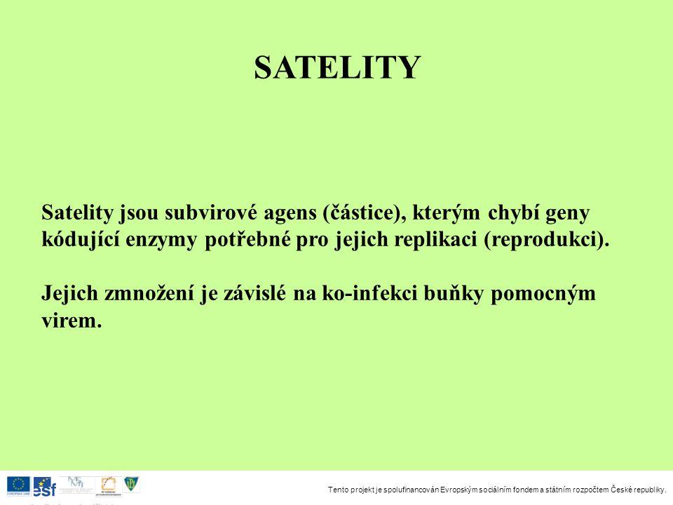 SATELITY Satelity jsou subvirové agens (částice), kterým chybí geny kódující enzymy potřebné pro jejich replikaci (reprodukci).
