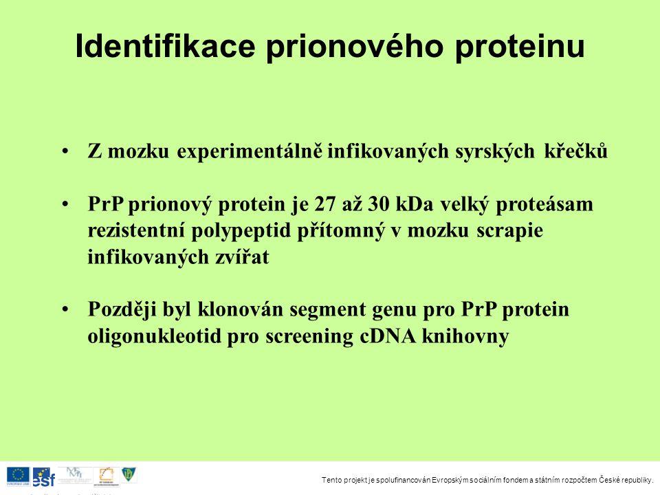 Identifikace prionového proteinu