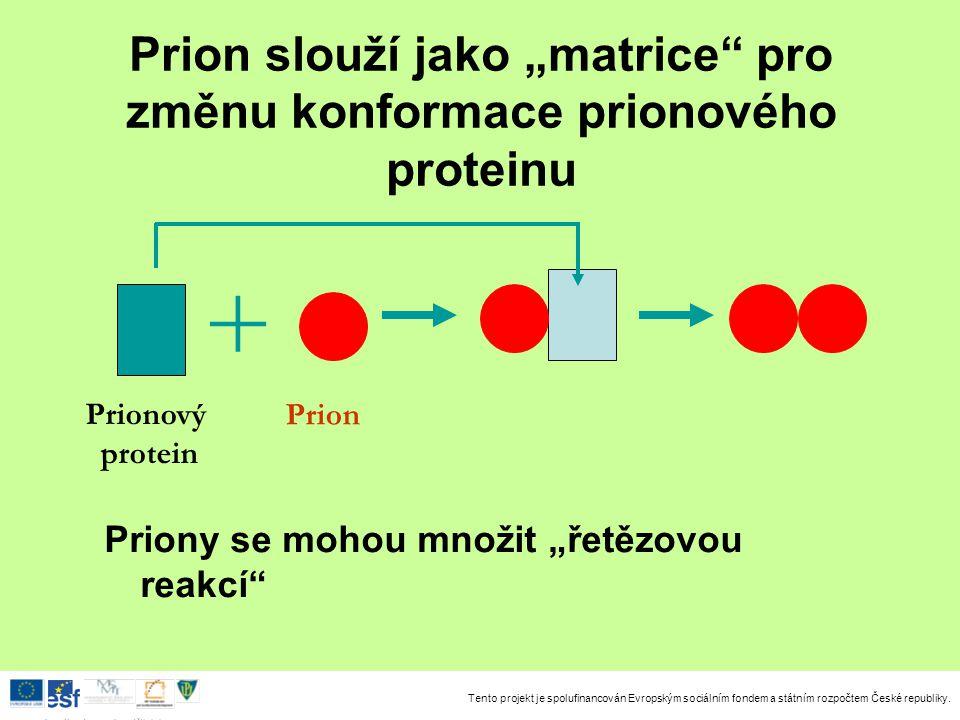 """Prion slouží jako """"matrice pro změnu konformace prionového proteinu"""