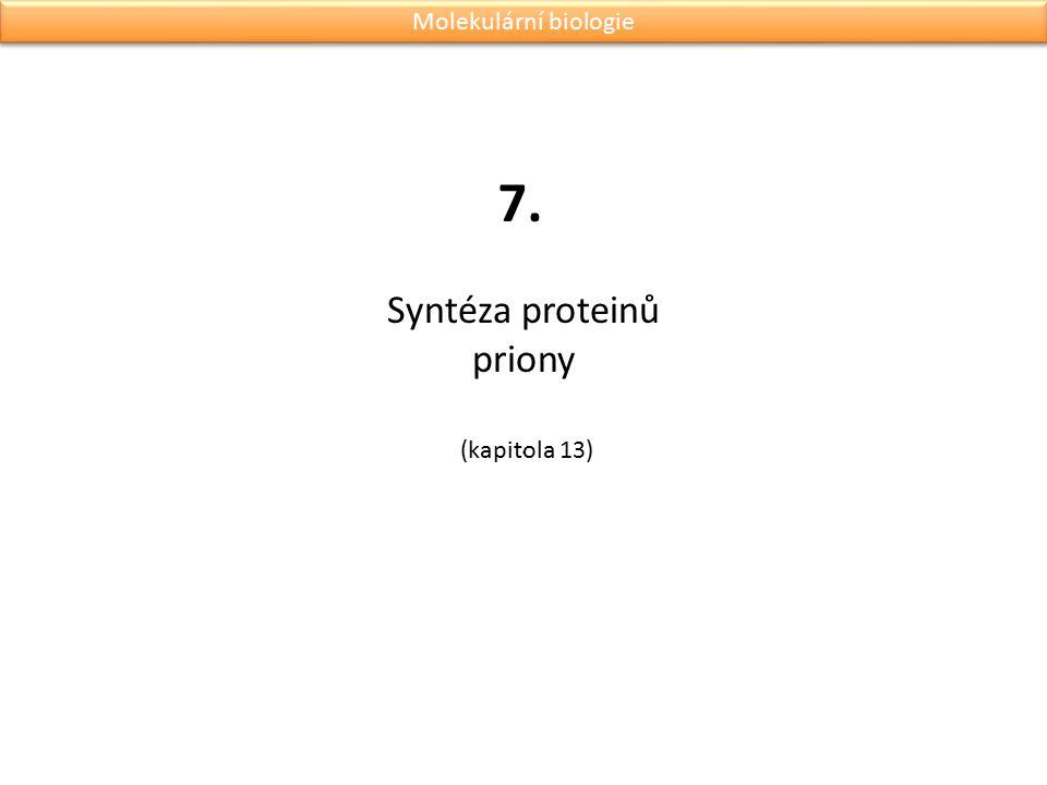 Syntéza proteinů priony .