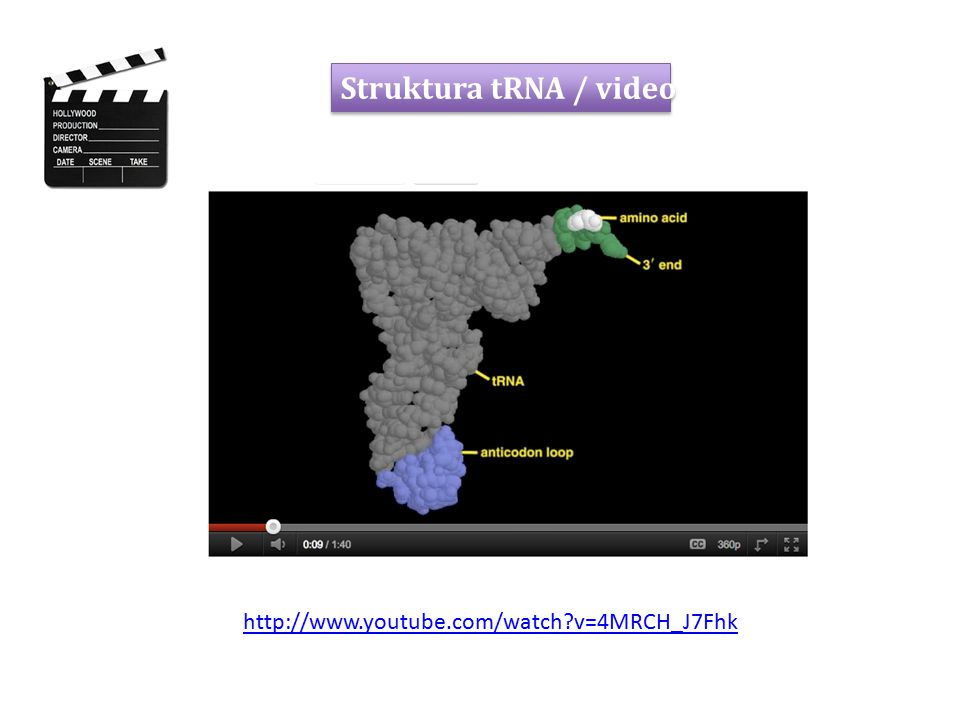 Struktura tRNA / video http://www.youtube.com/watch v=4MRCH_J7Fhk