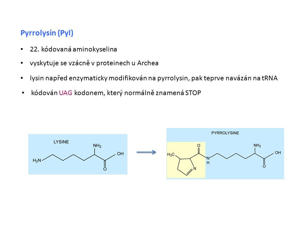 Pyrrolysin (Pyl) 22. kódovaná aminokyselina