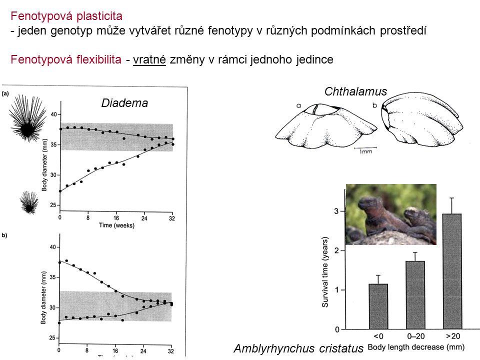 Fenotypová plasticita