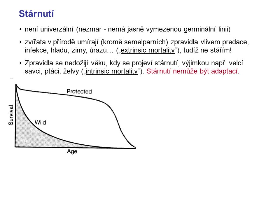 Stárnutí není univerzální (nezmar - nemá jasně vymezenou germinální linii)