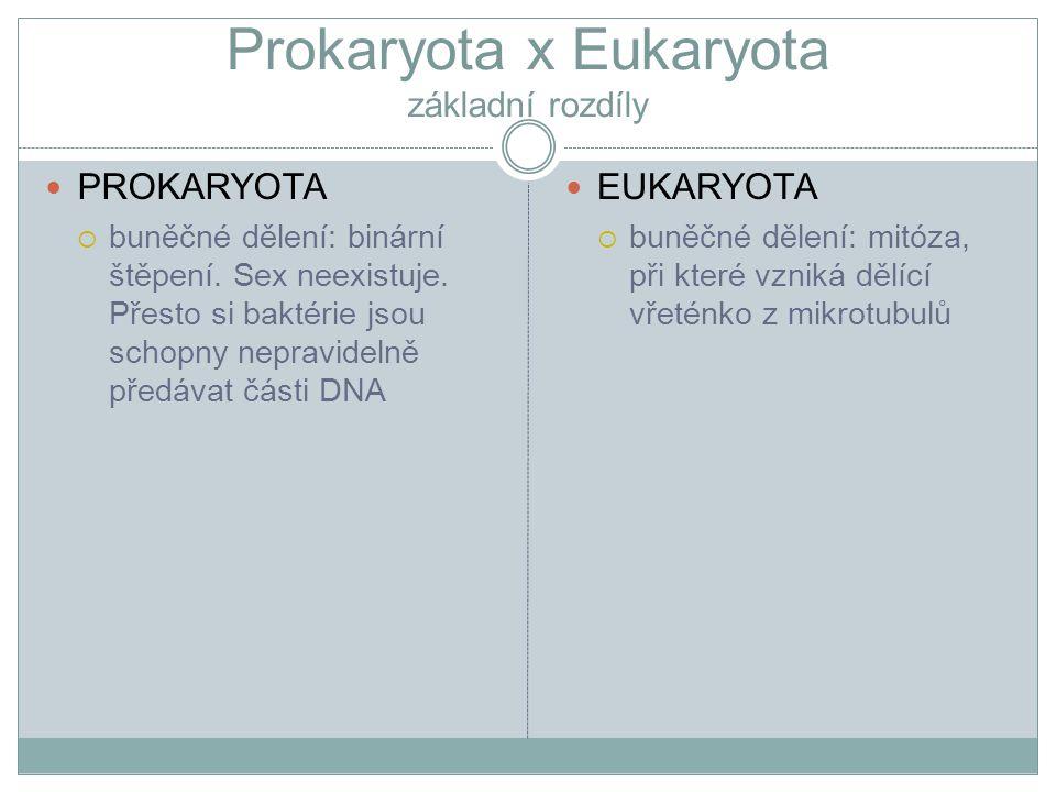 Prokaryota x Eukaryota základní rozdíly