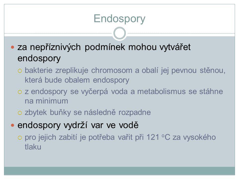 Endospory za nepříznivých podmínek mohou vytvářet endospory