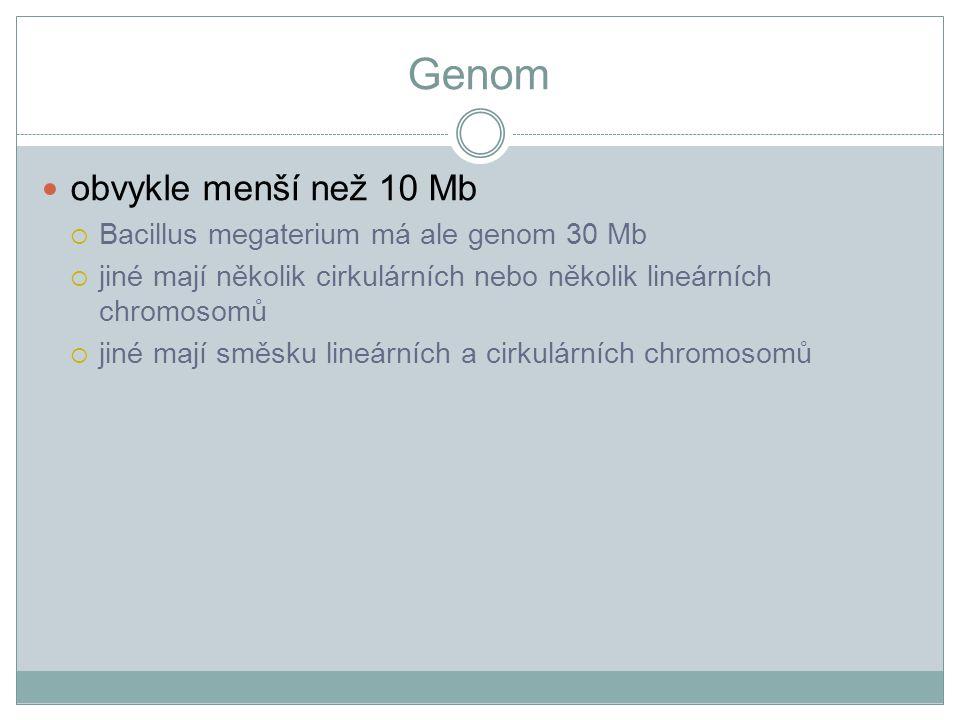 Genom obvykle menší než 10 Mb Bacillus megaterium má ale genom 30 Mb