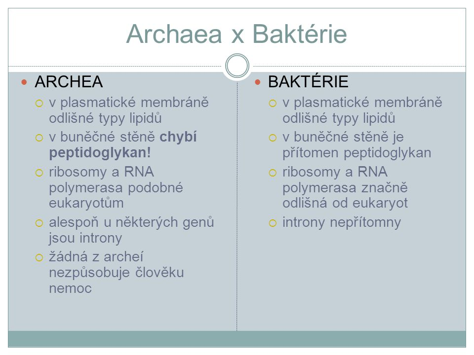 Archaea x Baktérie ARCHEA BAKTÉRIE