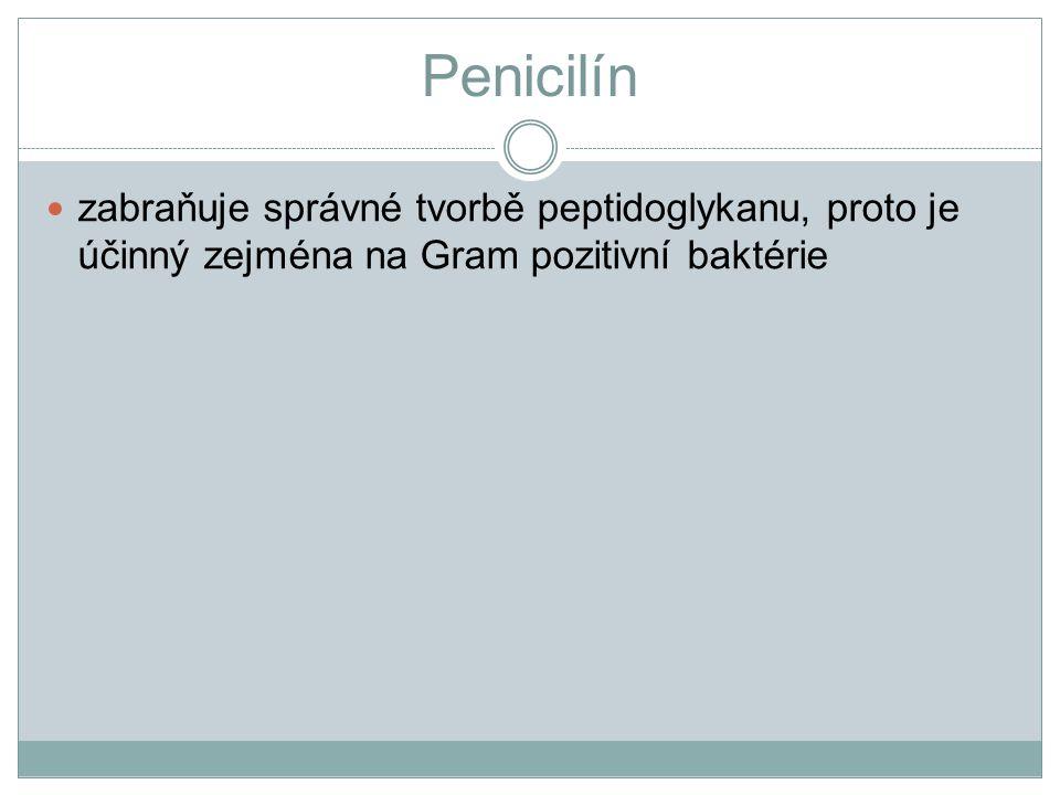 Penicilín zabraňuje správné tvorbě peptidoglykanu, proto je účinný zejména na Gram pozitivní baktérie.