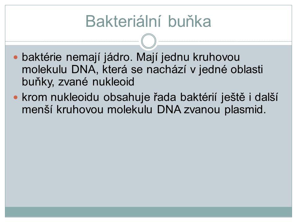 Bakteriální buňka baktérie nemají jádro. Mají jednu kruhovou molekulu DNA, která se nachází v jedné oblasti buňky, zvané nukleoid.