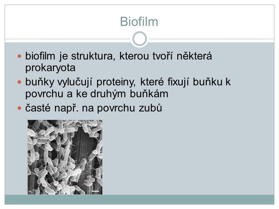 Biofilm biofilm je struktura, kterou tvoří některá prokaryota