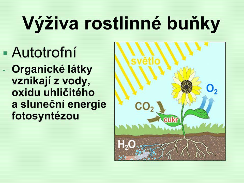 Výživa rostlinné buňky