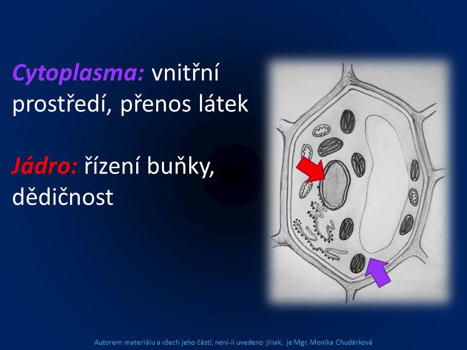 Cytoplasma: vnitřní prostředí, přenos látek