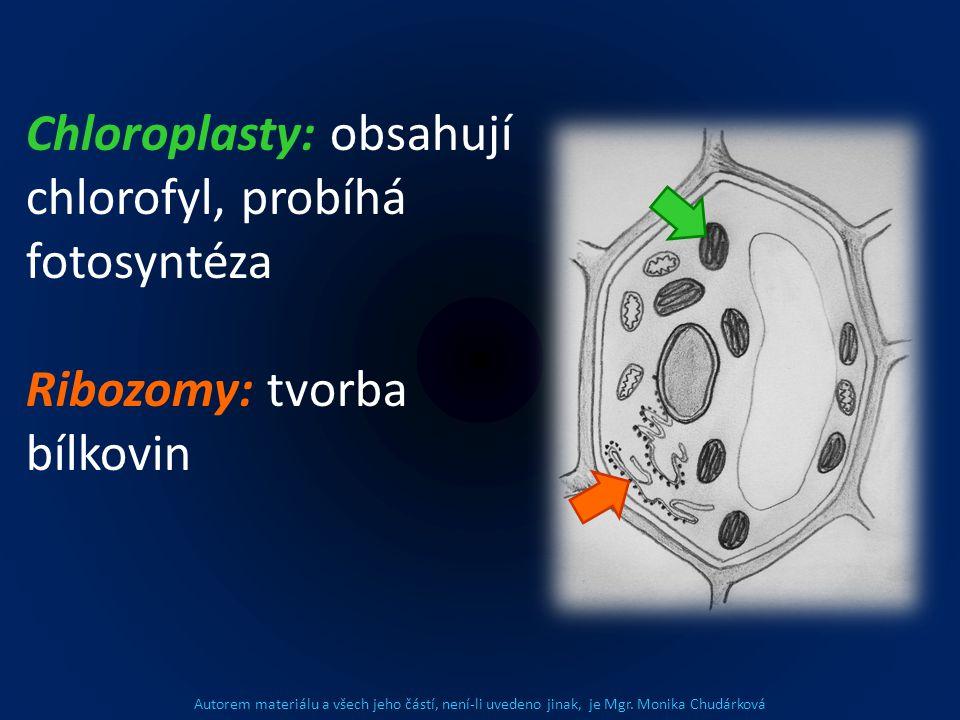 Chloroplasty: obsahují chlorofyl, probíhá fotosyntéza