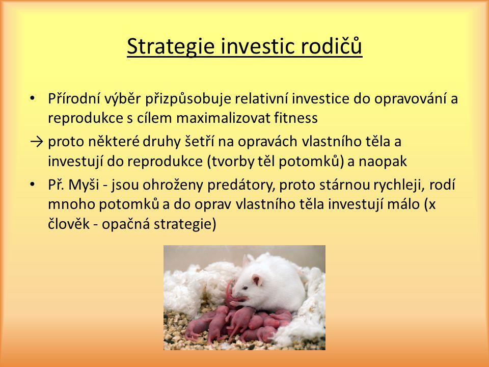 Strategie investic rodičů