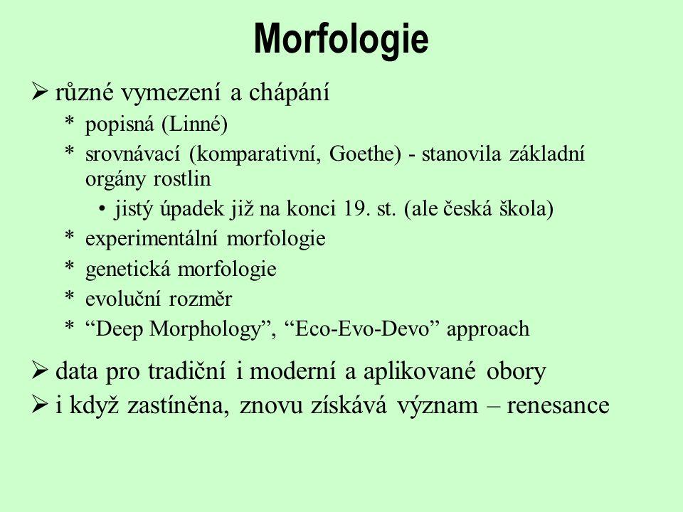 Morfologie různé vymezení a chápání