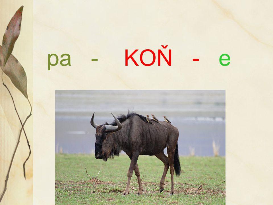 pa - KOŇ - e