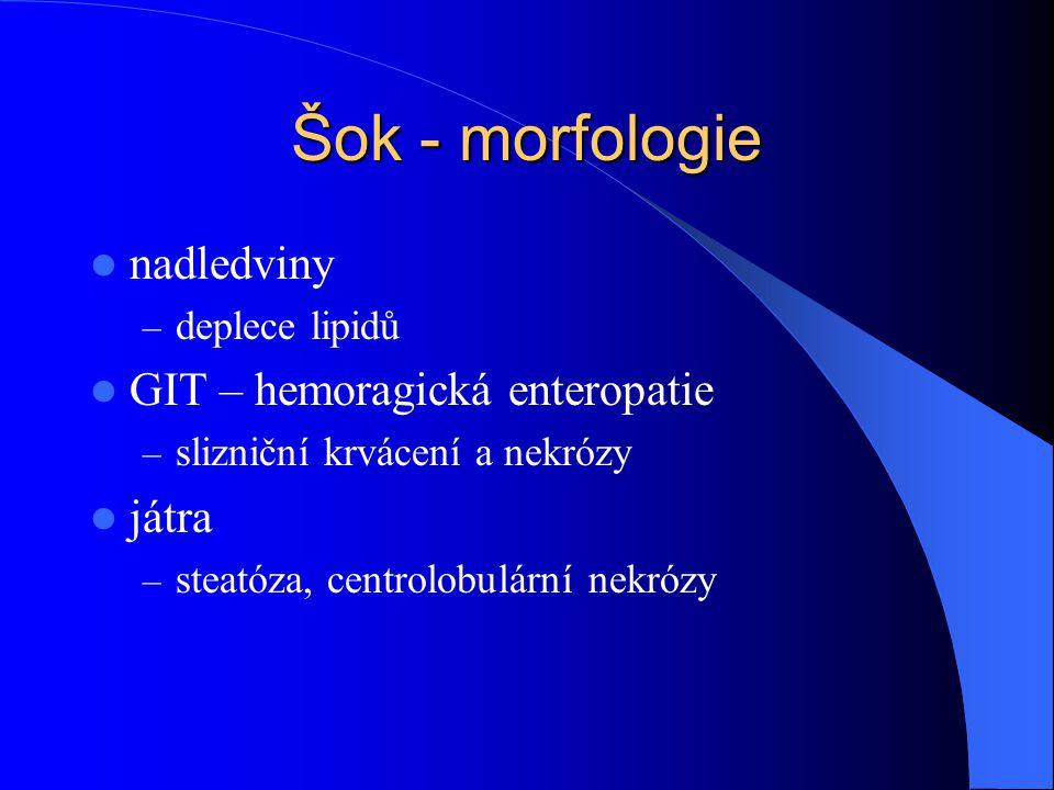 Šok - morfologie nadledviny GIT – hemoragická enteropatie játra