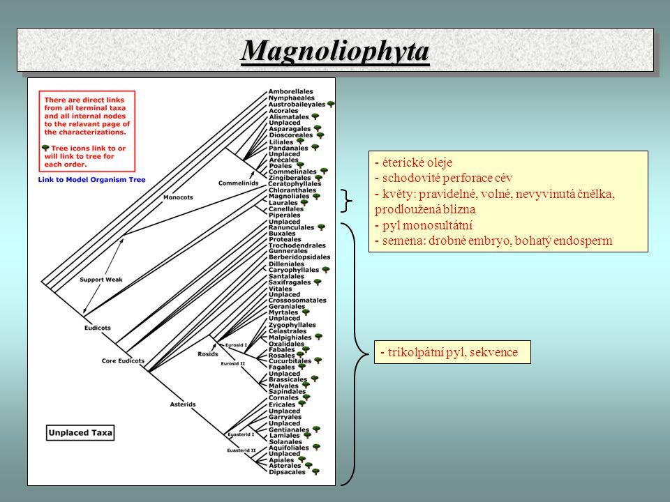 Magnoliophyta - éterické oleje - schodovité perforace cév
