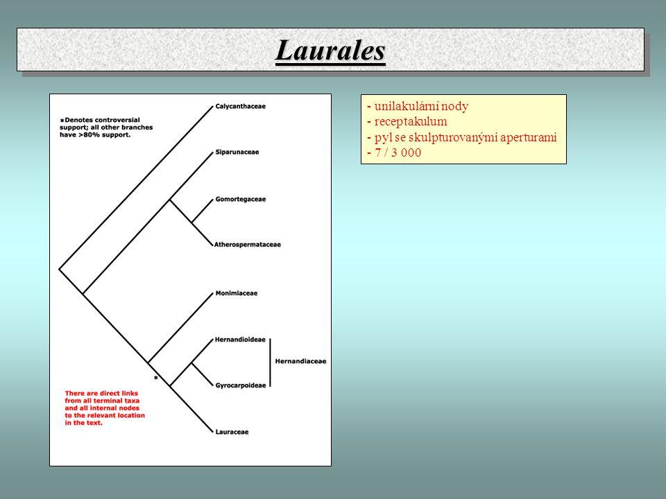 Laurales - unilakulární nody - receptakulum