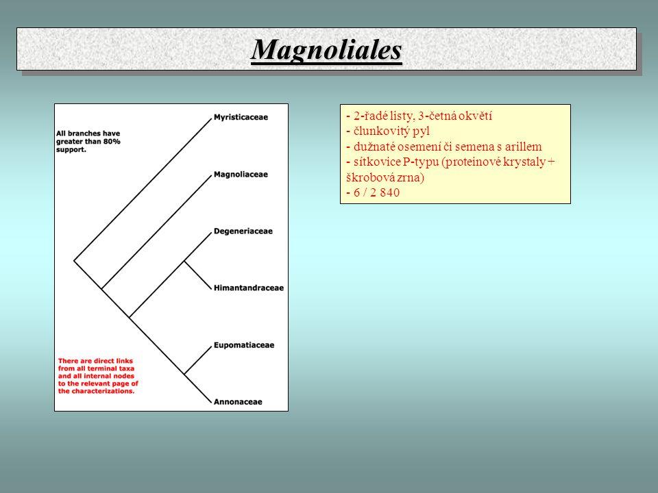 Magnoliales - 2-řadé listy, 3-četná okvětí - člunkovitý pyl