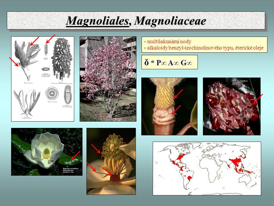 Magnoliales, Magnoliaceae