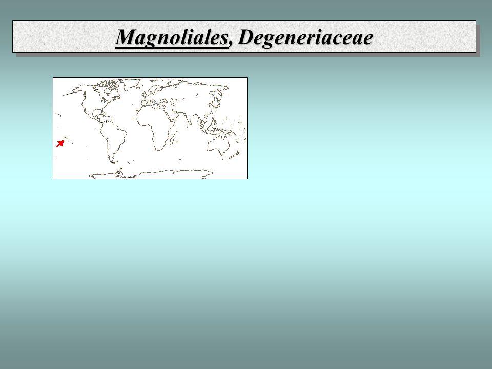 Magnoliales, Degeneriaceae