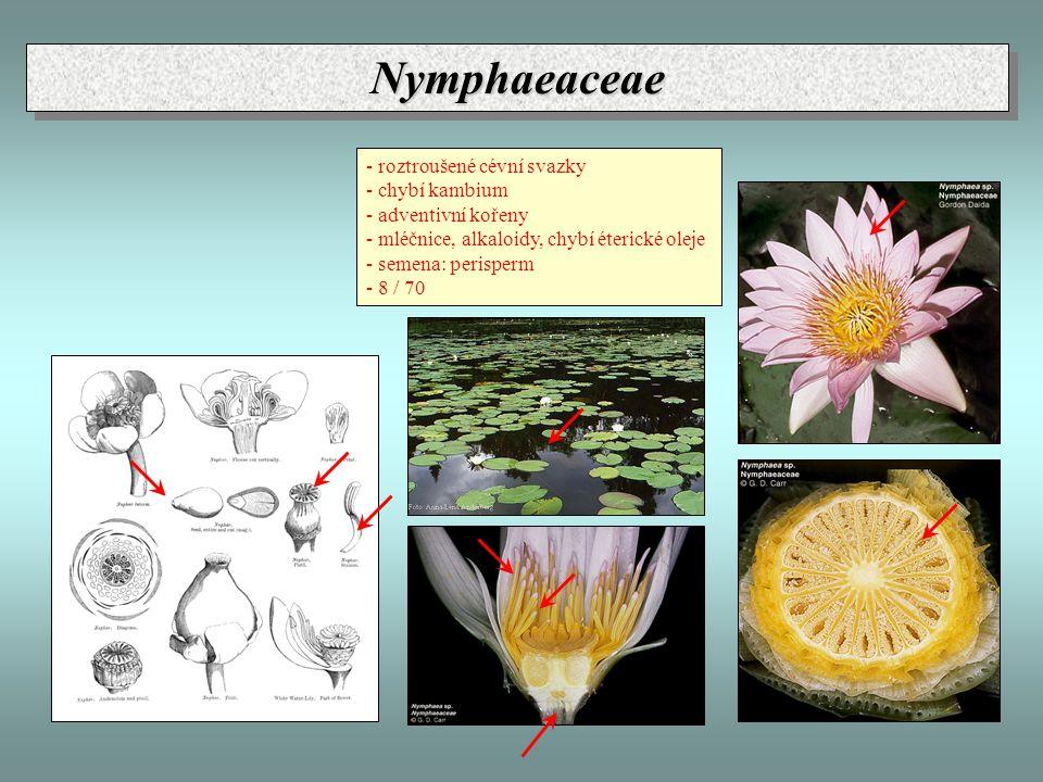 Nymphaeaceae - roztroušené cévní svazky - chybí kambium