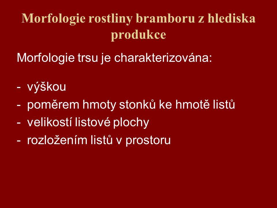 Morfologie rostliny bramboru z hlediska produkce