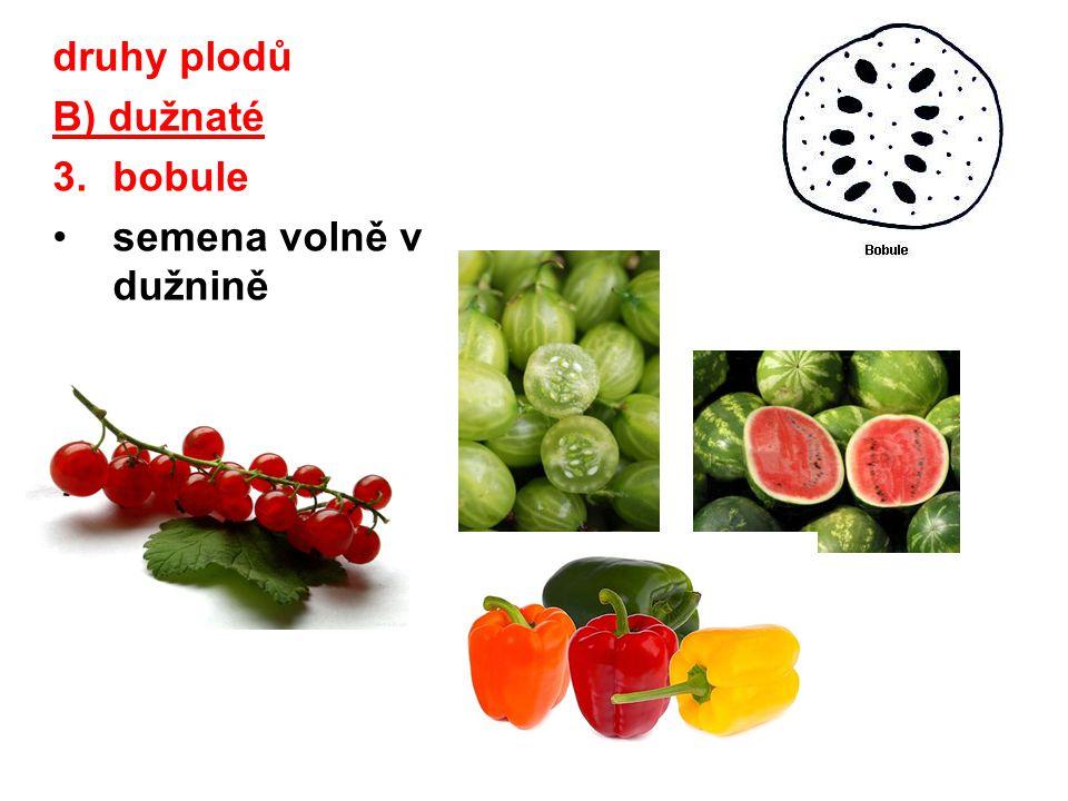 druhy plodů B) dužnaté bobule semena volně v dužnině