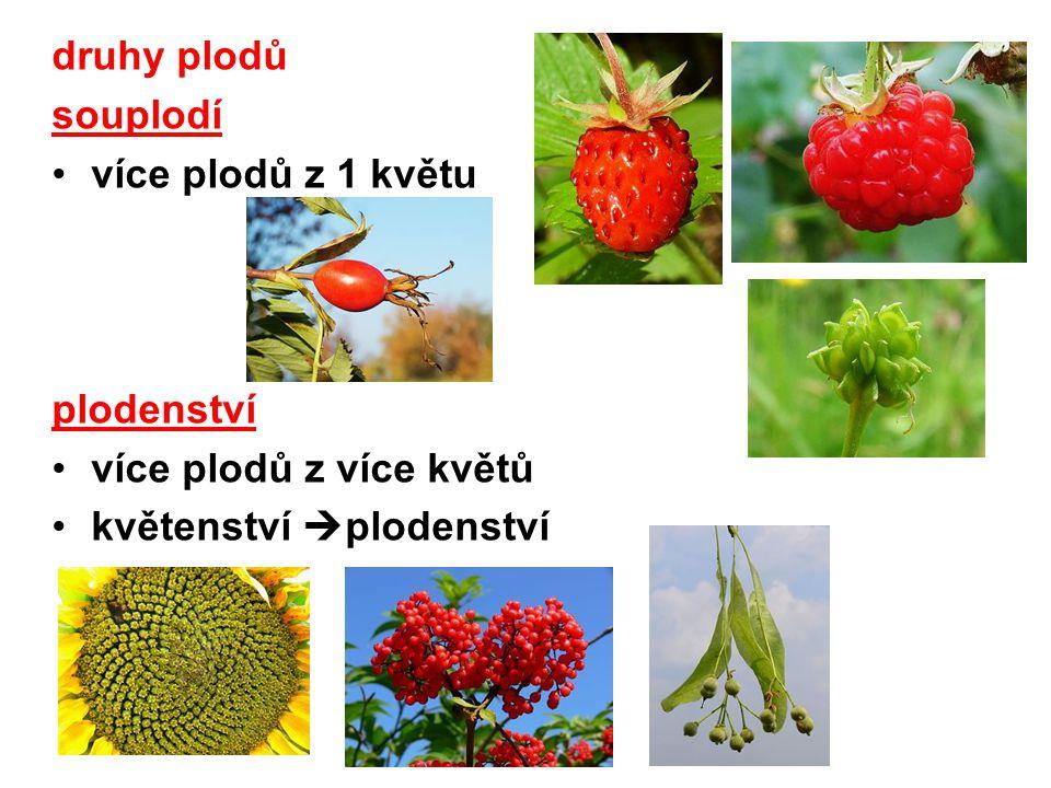 druhy plodů souplodí více plodů z 1 květu plodenství více plodů z více květů květenství plodenství