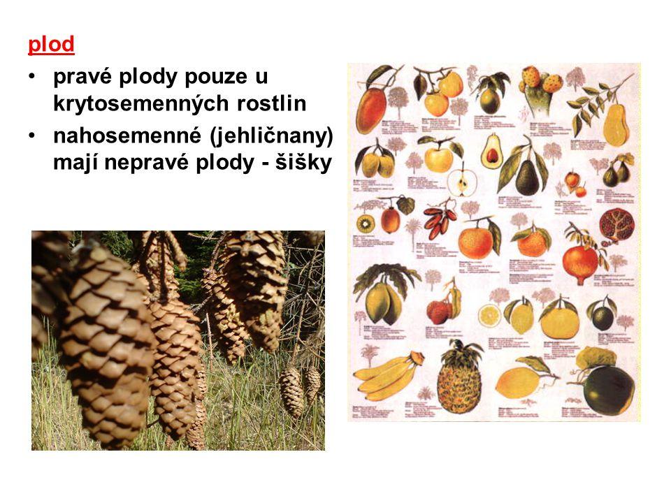 plod pravé plody pouze u krytosemenných rostlin nahosemenné (jehličnany) mají nepravé plody - šišky
