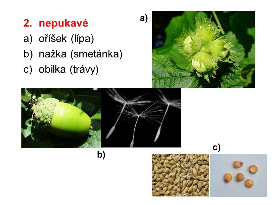 a) nepukavé oříšek (lípa) nažka (smetánka) obilka (trávy) c) b)