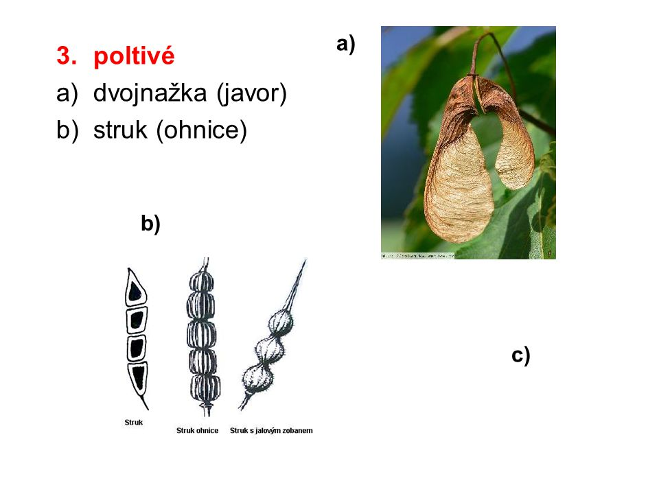 a) poltivé dvojnažka (javor) struk (ohnice) b) c)