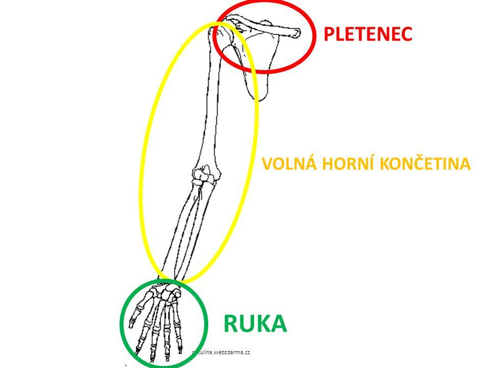 PLETENEC VOLNÁ HORNÍ KONČETINA RUKA petulina.webzdarma.cz