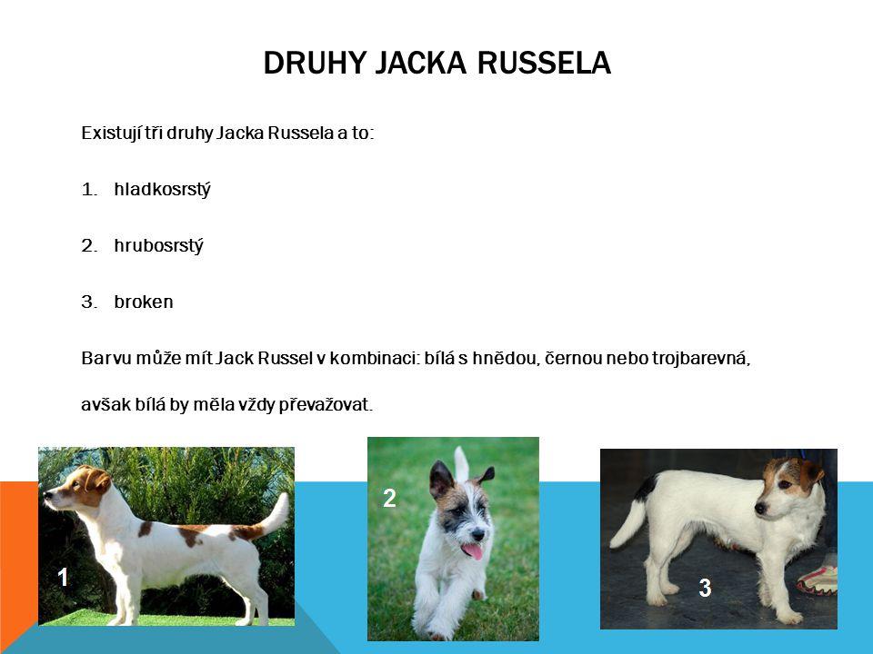 Druhy jacka russela Existují tři druhy Jacka Russela a to: hladkosrstý