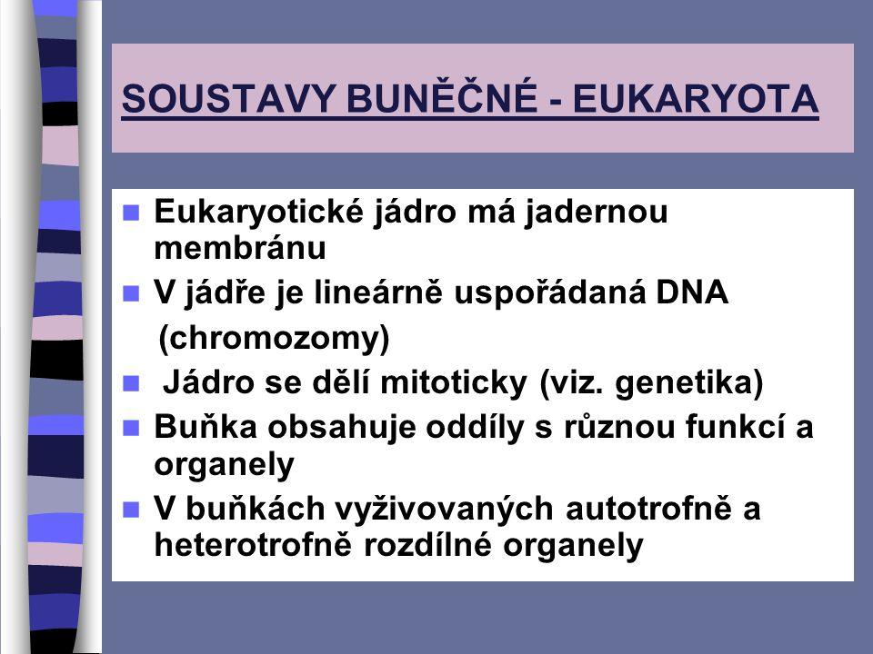 SOUSTAVY BUNĚČNÉ - EUKARYOTA