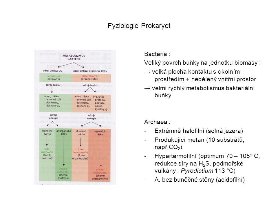 Fyziologie Prokaryot Bacteria :