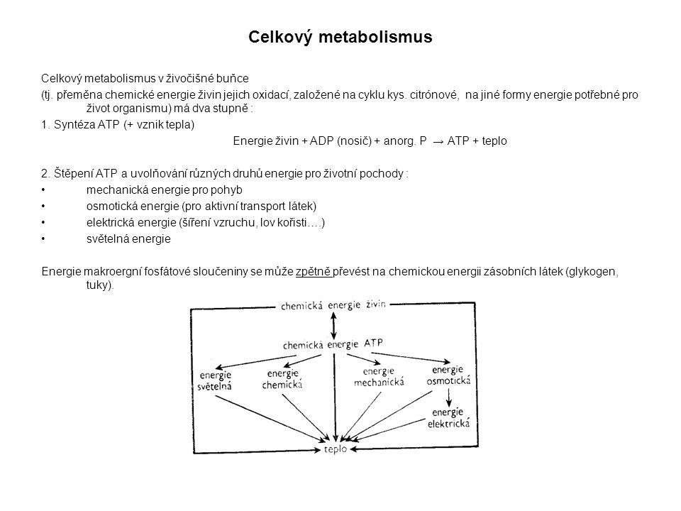 Celkový metabolismus Celkový metabolismus v živočišné buňce