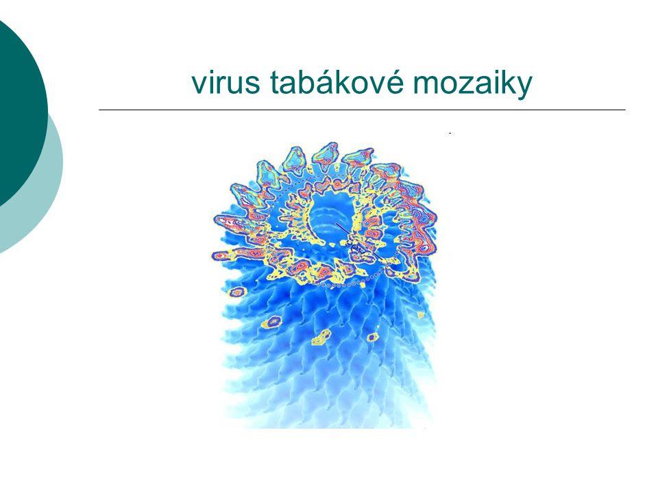 virus tabákové mozaiky