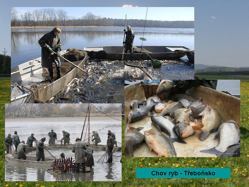 Chov ryb - Třeboňsko