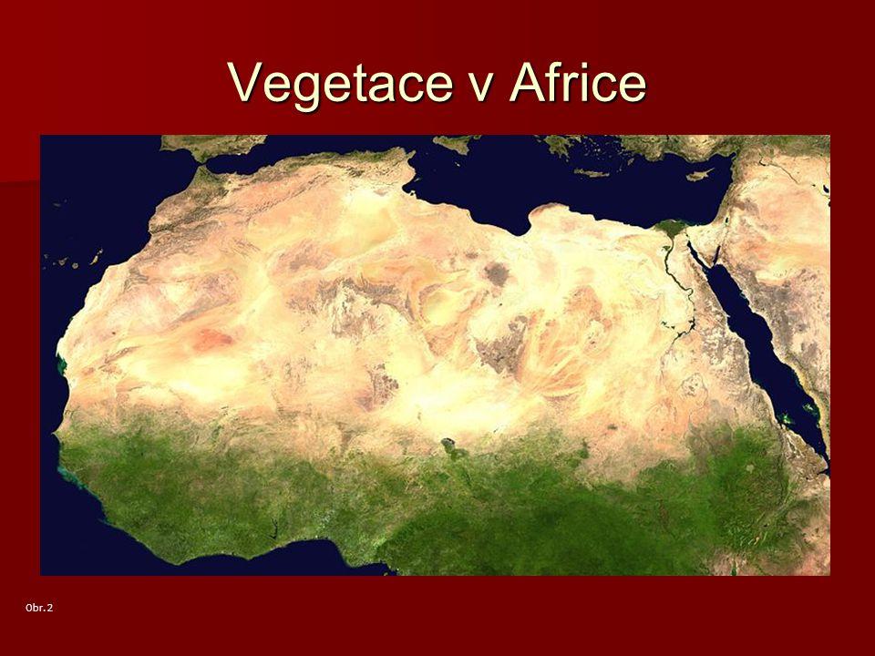 Vegetace v Africe Obr. 2