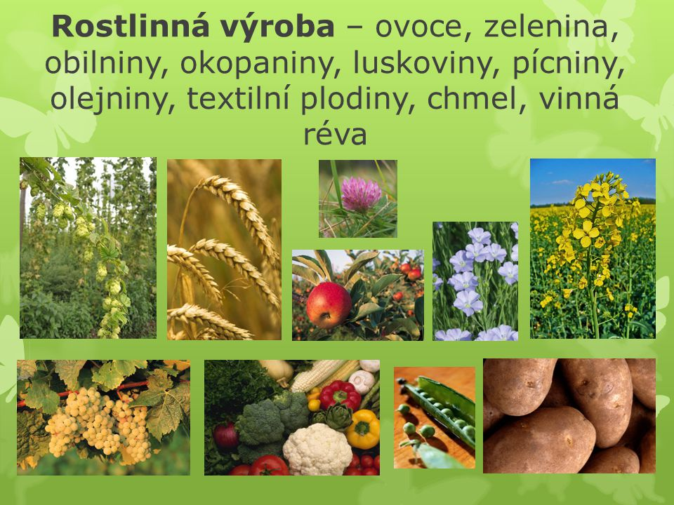 Rostlinná výroba – ovoce, zelenina, obilniny, okopaniny, luskoviny, pícniny, olejniny, textilní plodiny, chmel, vinná réva