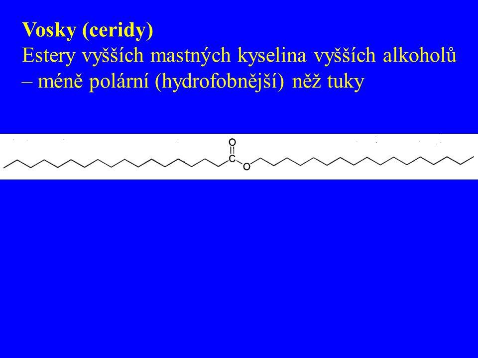 Vosky (ceridy) Estery vyšších mastných kyselina vyšších alkoholů – méně polární (hydrofobnější) něž tuky.
