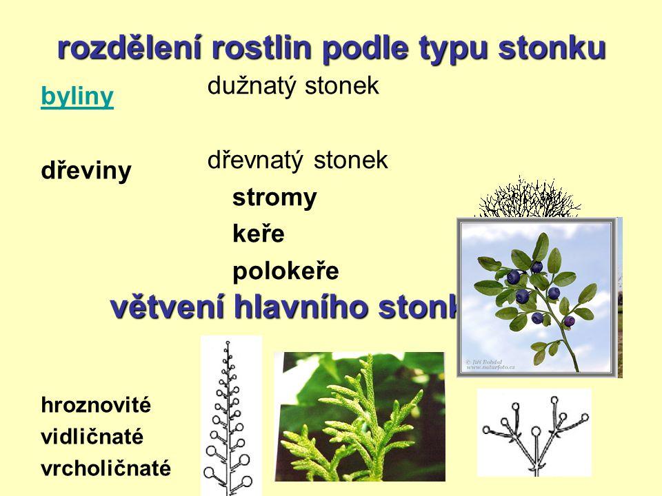 rozdělení rostlin podle typu stonku