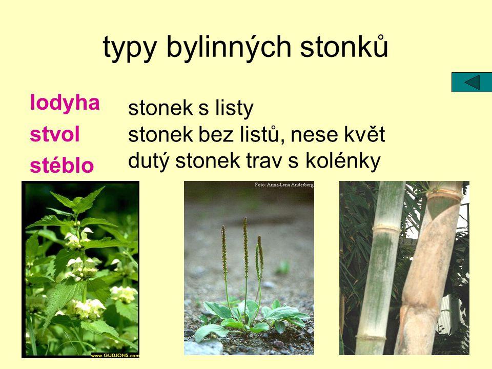 typy bylinných stonků lodyha stonek s listy stvol