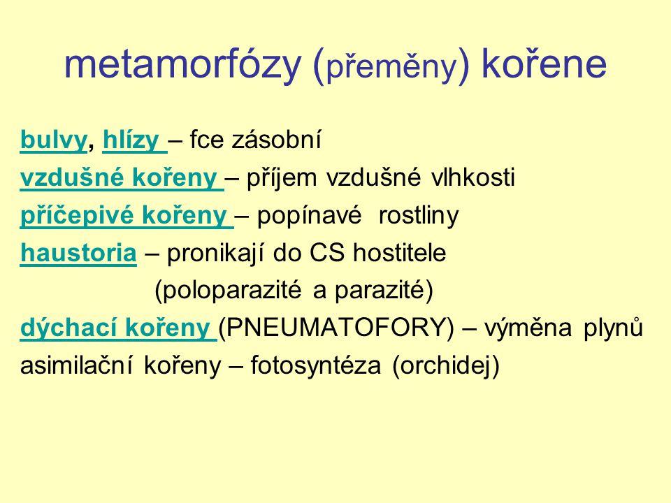 metamorfózy (přeměny) kořene