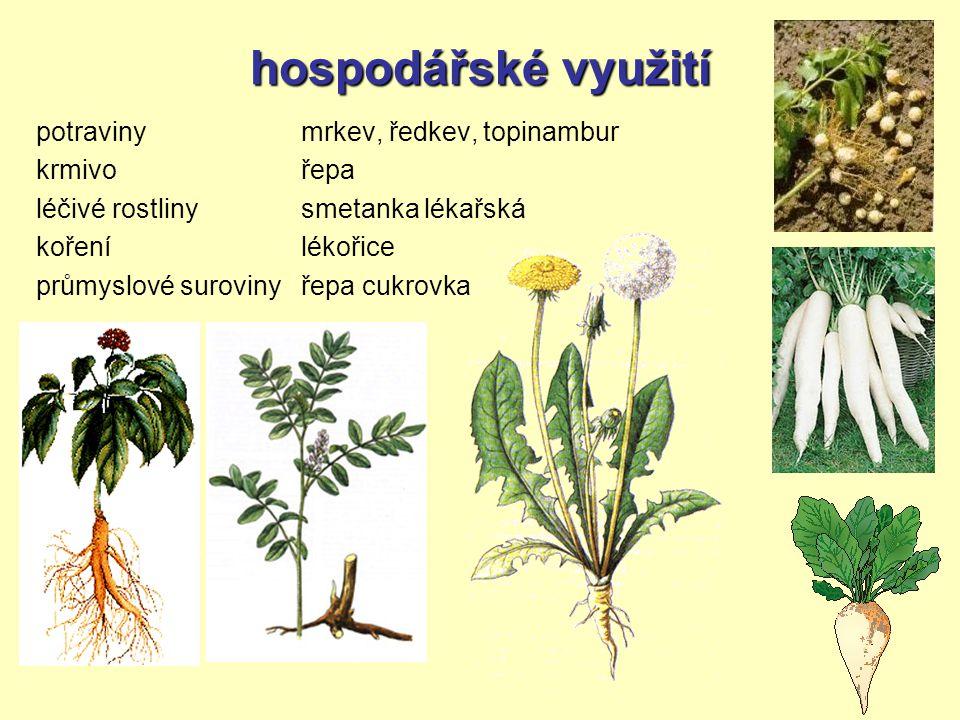 hospodářské využití potraviny krmivo léčivé rostliny koření